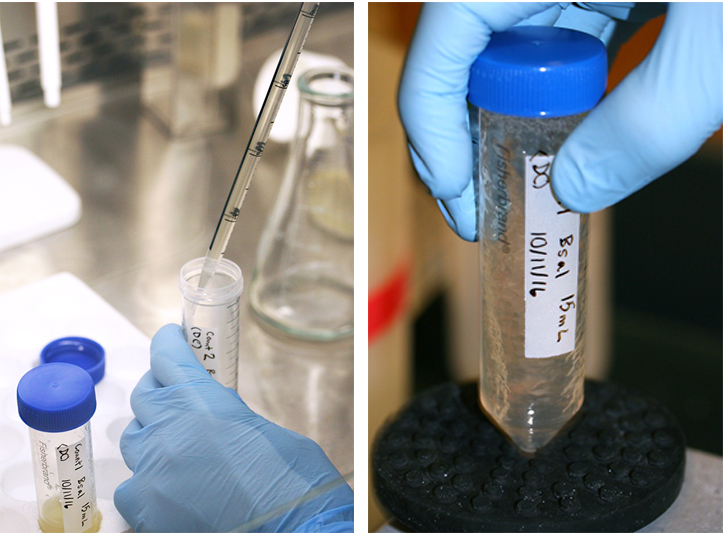 Bsal extract is transferred to test tubes.