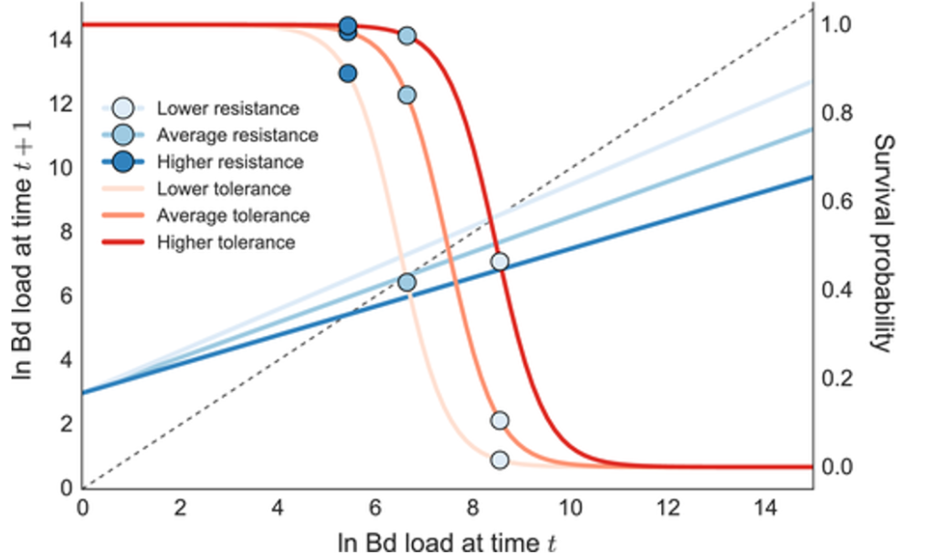 Line graph showing host resistance and survival of pathogen Bd.