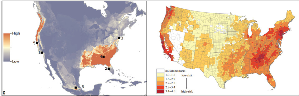 Risk assessment illustrating the likelihood of Bsal invasion given environmental suitability, proximity to importation ports, and salamander species richness.